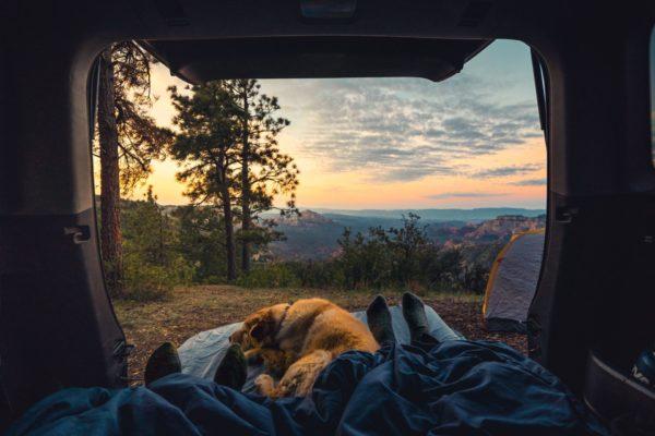 キャンプと犬
