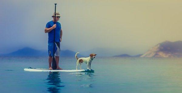 パドルボードと犬