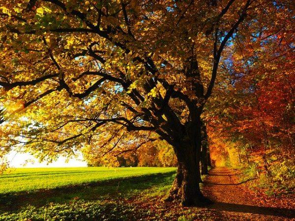 木々が紅葉している広場
