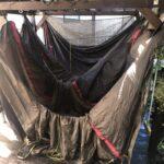 ツールームテントを乾かす